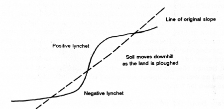 Lychet Diagram